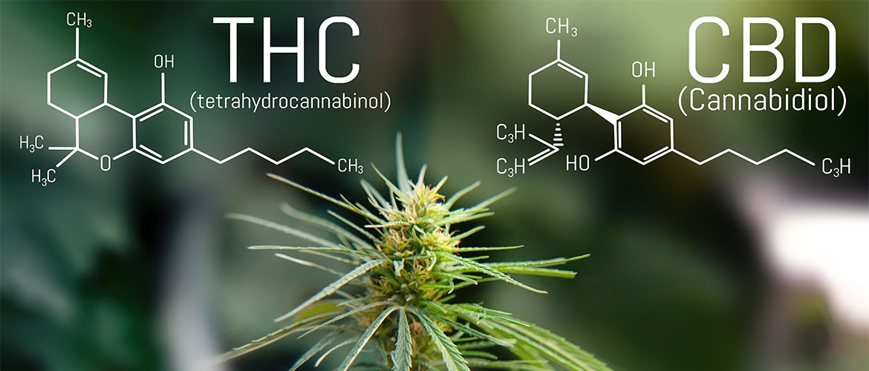 Spreizung CBD zu THC - Stimmen die Angaben der Inhaltsstoffe?